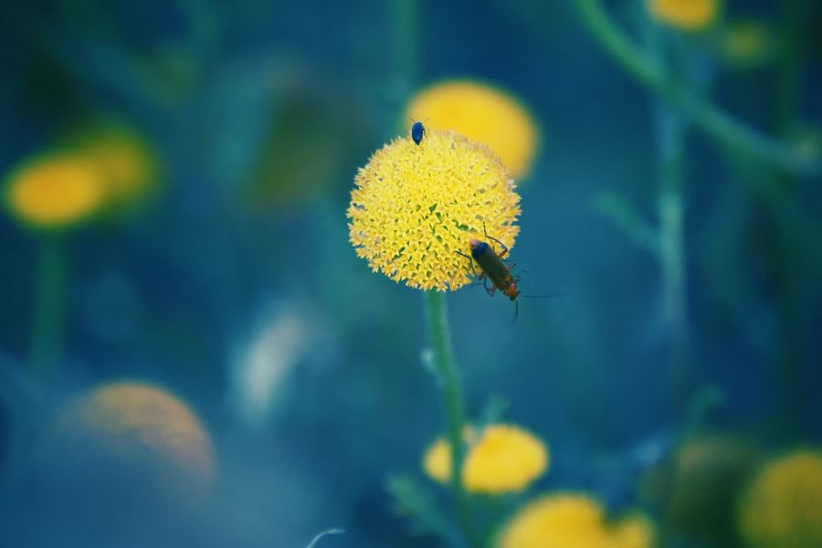 EyeEm Nature Lover EyeEm Best Shots Eye4photography  EyeEm Gallery EyeEm EyeEmBestPics EyeEm Best Shots - Nature Eye Em Nature Lover Beauty In Nature EyeEm Flower EyeEm Flowers Collection Animal Themes Flower Flower Head Yellow Insect
