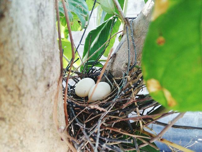 รังนก Leaf Agriculture New Life Bird Bird Nest Close-up Animal Themes