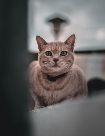 Portrait of tabby cat sitting at home