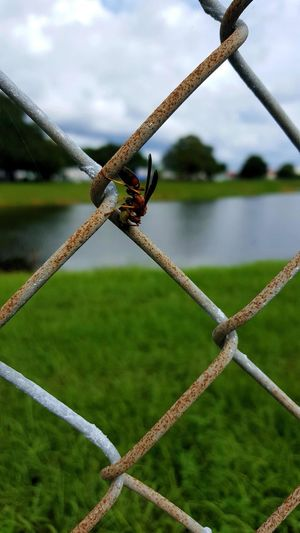 Close-up of hornet on chainlink fence by lake against sky
