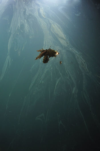 High angle view of leaf in mid-air over polluted sea