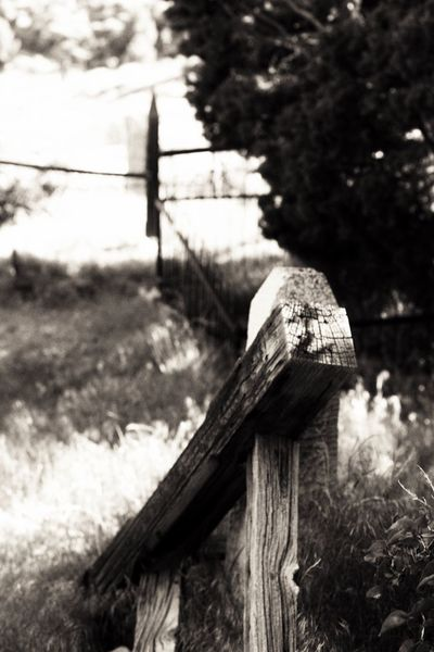 Field Focus On Foreground Tree Nature Growth Outdoors No People Scarecrow Grass Day Sky Beauty In Nature Close-up Dark🌌 By Tisa Clark Cemetery Graveyard Dark Photography Blackandwhite Black & White By Tisa Clark Darkness And Light Shadows & Lights