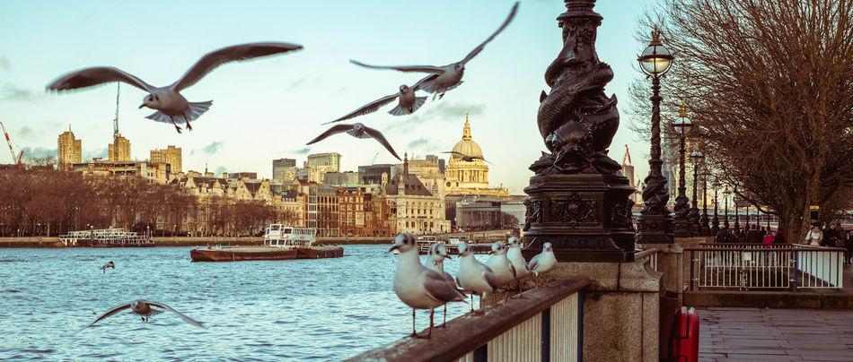 Animal Themes Architecture Bird Building Exterior Cinematic Cinematic Look Cinematic Photography Cinematic Street Cinematography City Clear Sky Day Flying No People Outdoors Sculpture Sky Statue Water