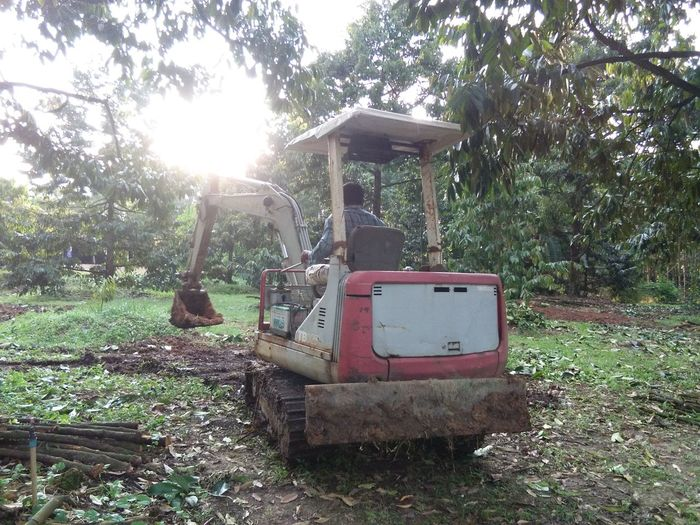 Tree Day Outdoors Grass Nature Sky Sunlight Garden Durian Green Color Close-up Dig A Hole Backhoe Growth