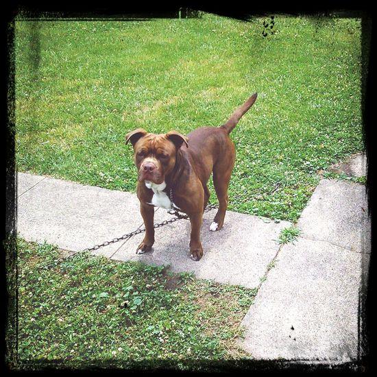 Tyson standing proud