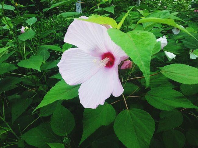 Flower Green Color Pink Color