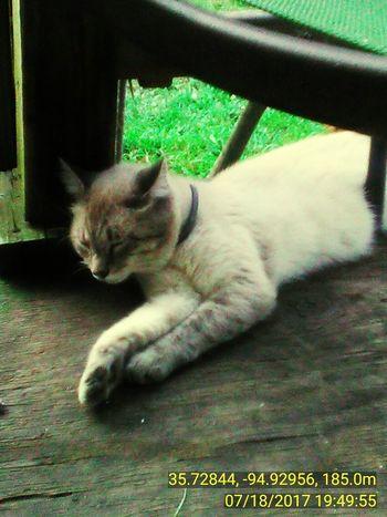 Pets One Animal Feline Lying Down EyeEmNewHere EyeEm Selects