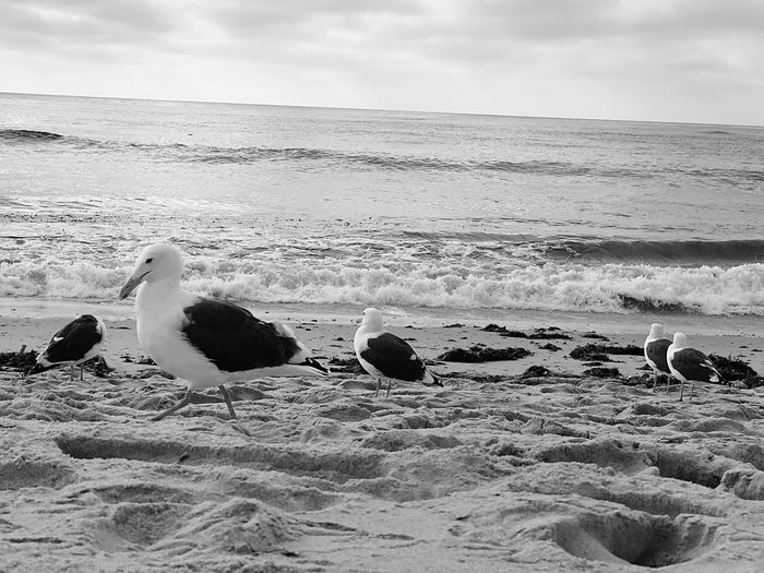 Seagull and Friends Seaside Water Ocean View Ocean Seagull Sky Land Beach Water Nature Cloud - Sky Sea Scenics - Nature Tranquility Sand No People Outdoors Horizon Over Water Tranquil Scene Day