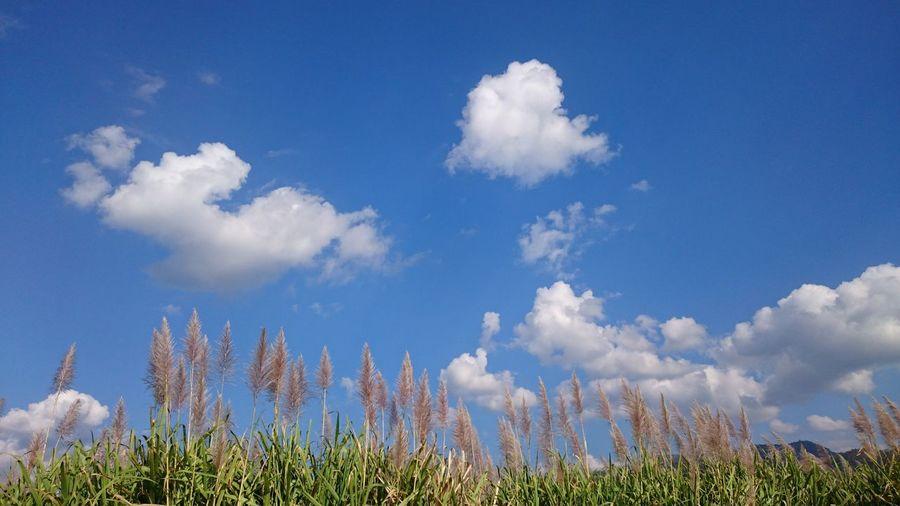 Sky Pleasant