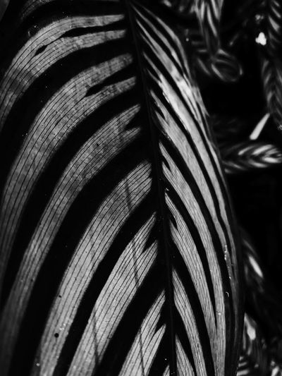 Close-up Pattern No People Focus On Foreground Day Textured  Full Frame Plant Nature Backgrounds Selective Focus Outdoors Wood - Material Natural Pattern Metal Strength Sunlight Palm Tree Growth Abundance Palm Leaf