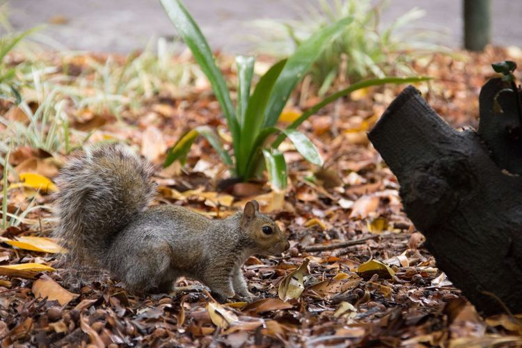 The rare frozen squirrel. Cape Town Squirrel Animal Animal Themes One Animal Animal Wildlife Plant Part Animals In The Wild No People Leaf Beauty In Nature