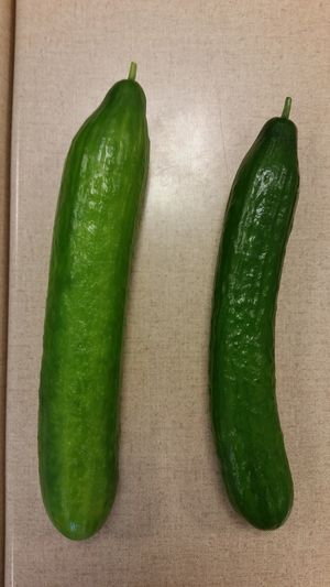 Which one is décaffé? Green Cumcumber Plants Food Water