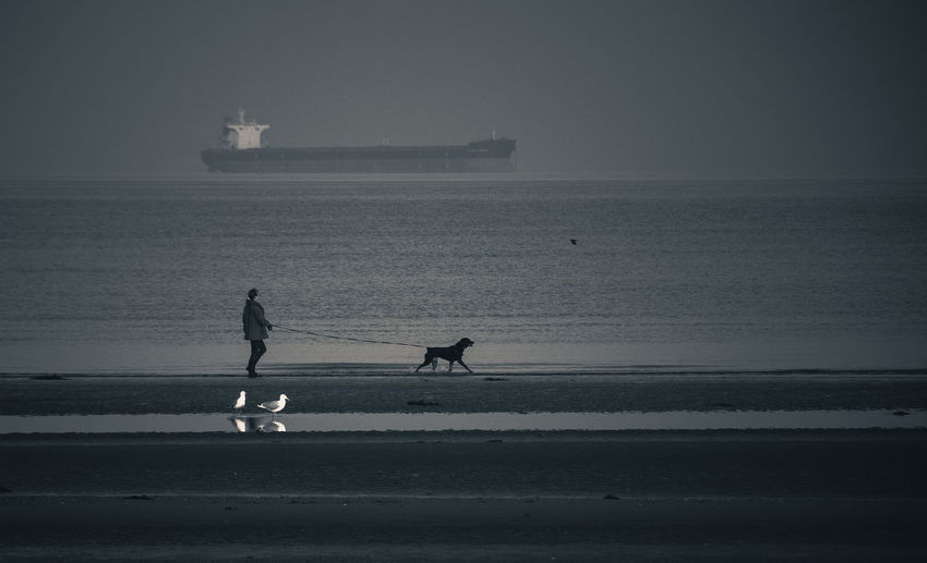 Side View Of A Man With Dog On Beach Against Calm Sea