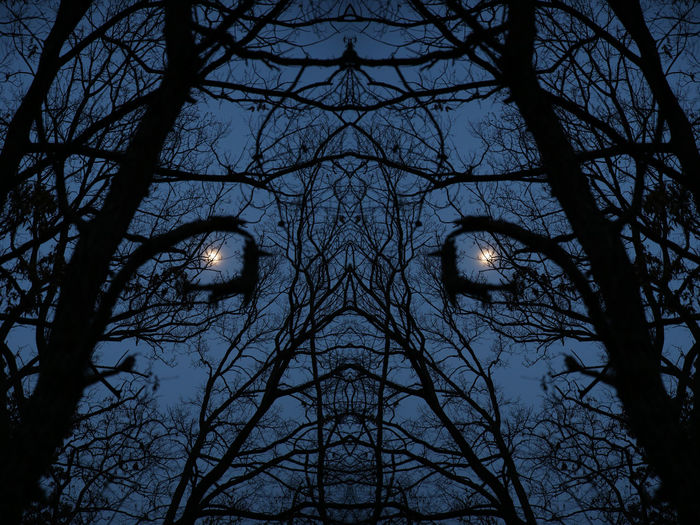 Staring Eyes Full Moon Tree Branches Bizzare Bleak Duplicated Glint In The Darkness Horrible Moonlight Night