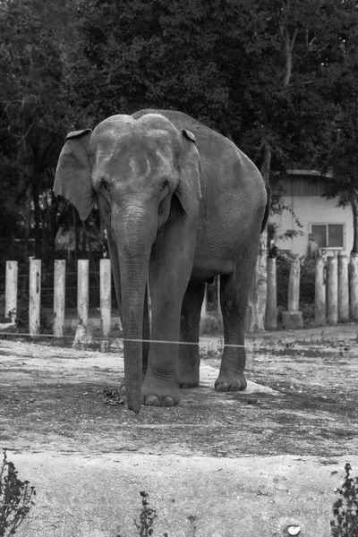 Animal Photography Animals Chiang Mai Night Safari Elephant