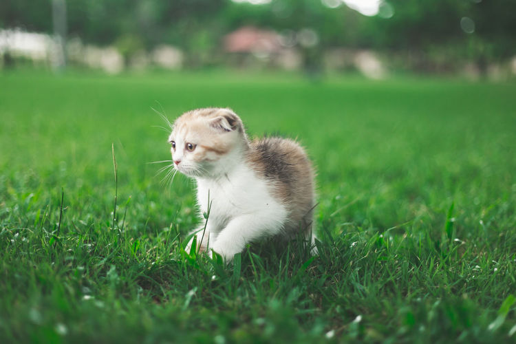 View of a cat on grass