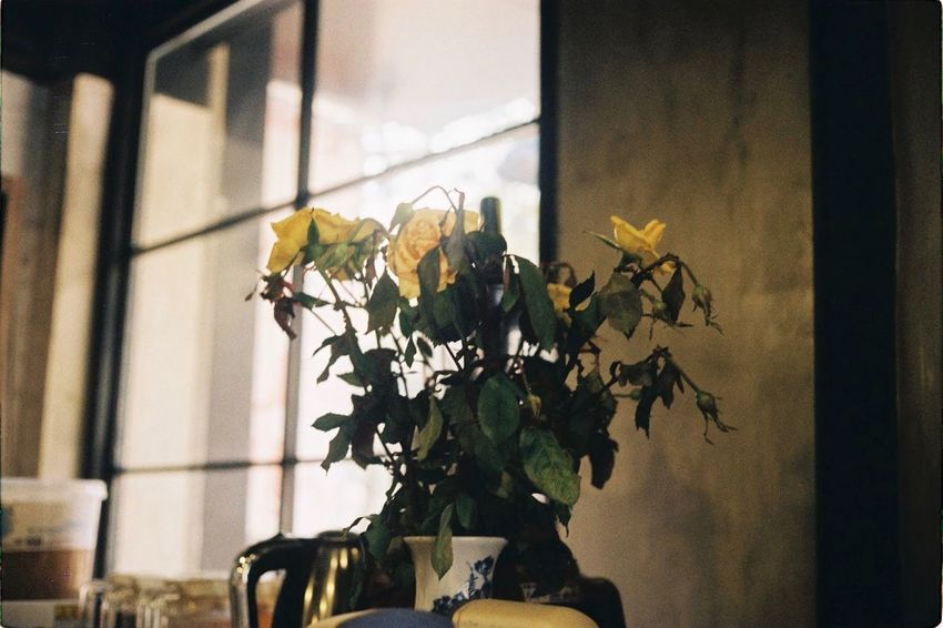 🥀 Kodakfilm Filmcamera Filmisnotdead Film Photography Olympus 35 SP Flower Nature Plant Growth No People Fragility Leaf Close-up Beauty In Nature Flower Head Business Stories