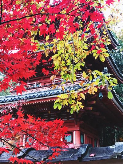 History Autumn Leaf Change Architecture Building Exterior Outdoors Day Tree Built Structure Low Angle View Red Beauty In Nature No People