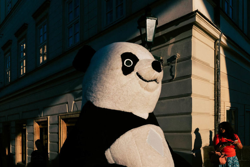 Panda in natural habitat. Halloween Costume Day Disguise Light And Shadow Panda - Animal People Streetphotography Stuffed Toy Toy