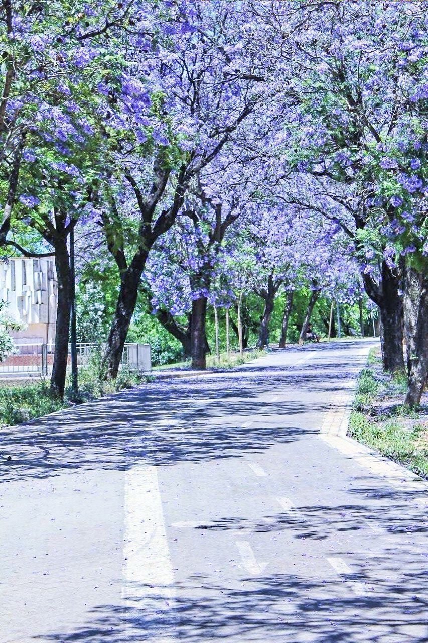 tree, road, the way forward, nature, diminishing perspective, empty, beauty in nature, no people, outdoors, day, tree trunk, scenics, flower, tranquility, growth, sunlight, branch, walkway, freshness