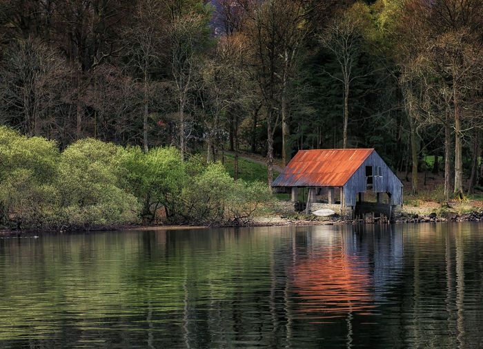 Boathouse Tree
