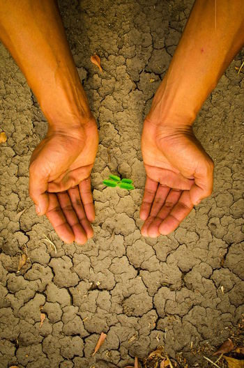 plant glowing on dry sand, Hope concept Drought Desert Hope Plant Adult Adults Only Arid Climate Close-up Concept Cracked Day Dirt Drought Dry Glowing Hand Heart Heart Shape Human Body Part Human Hand Men One Man Only One Person Only Men Outdoors People Real People