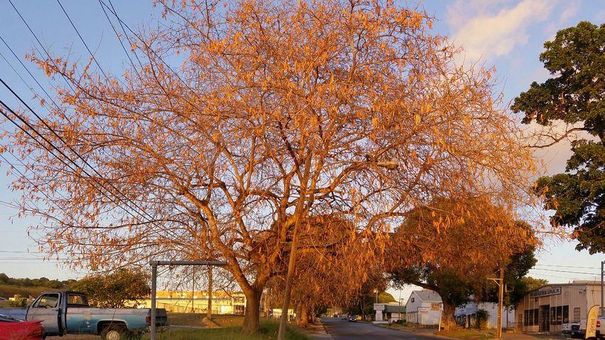 Tree Sky Outdoors Day StreetSt.Croix, US Virgin Islands