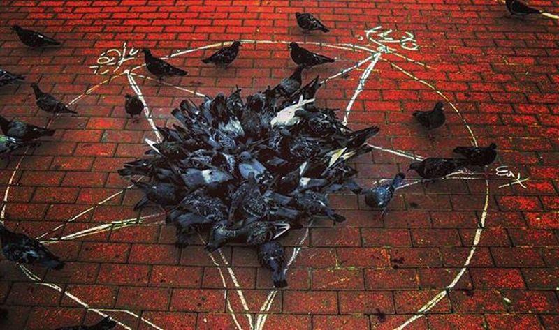 Pentagram Birds Thedarkness Goth Evil Cute Aww