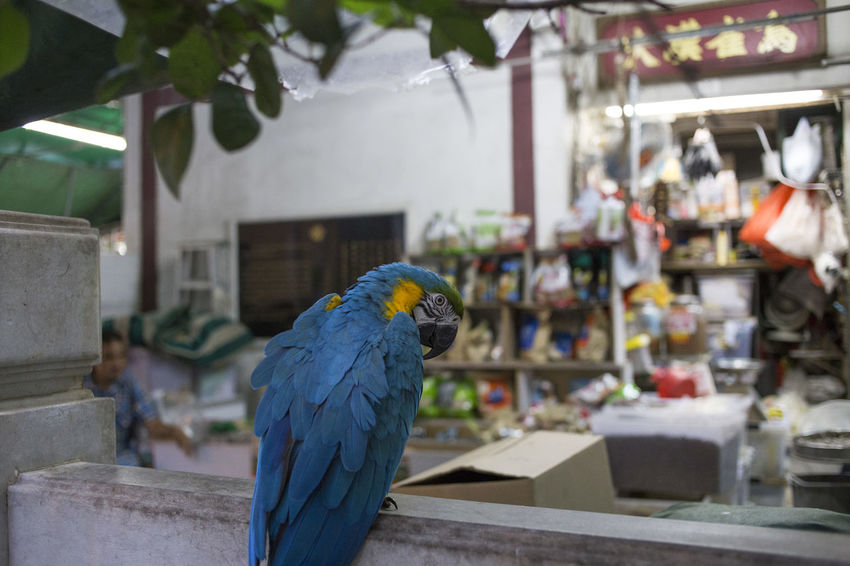 Animal Animal Themes Animal Wildlife Animals In The Wild Architecture Bird Blue Built Structure Day Focus On Foreground Gold And Blue Macaw Macaw Nature No People One Animal Outdoors Parrot Perching Vertebrate