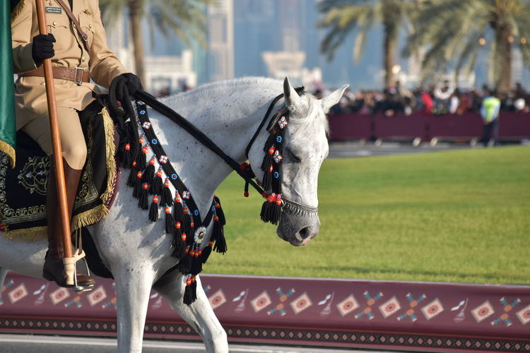 Military man in uniform in horse Qatar National Day Animal Themes Close-up Competition Day Domestic Animals Horse Horse Cart Horse Racing Horseback Riding Jockey Mammal One Animal Outdoors Qatar Horse Qatar Military In Horse Sport Sports Track