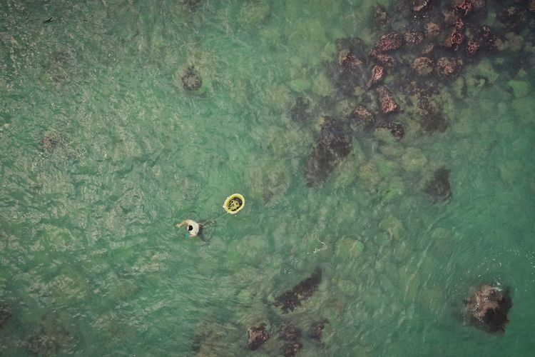High angle view of fish swimming in sea