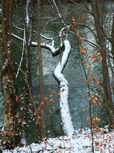 Tree, Tree Winter Cold Temperature Branch Tree Trunk Bare Tree Forest Snow Day Tranquility Beauty In Nature
