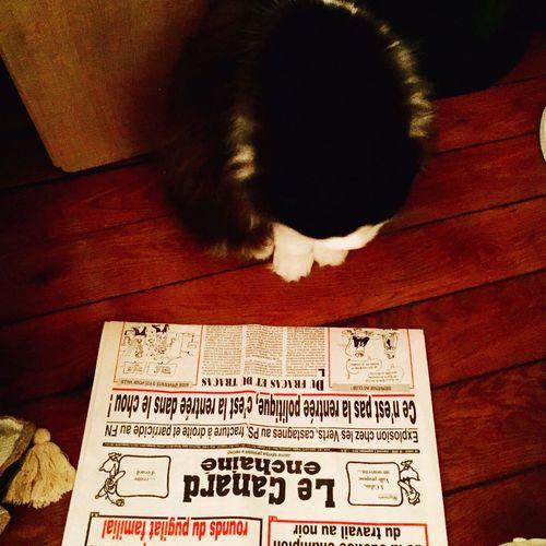 Political Cat First Eyeem Photo