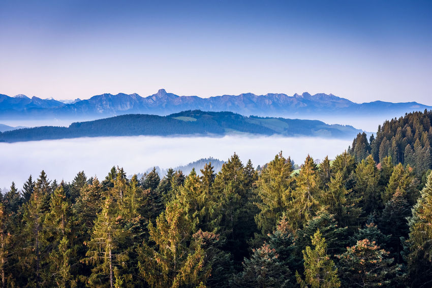 Arrival Backgrounds Beauty In Nature Blue Clear Sky Forest Landscape Mountain Mountain Peak Mountain Range Natural Parkland Nature No People Outdoors Pinaceae Pine Tree Pine Wood Pine Woodland Scenics Sky Sunset Tourism Tree Tree Area WoodLand