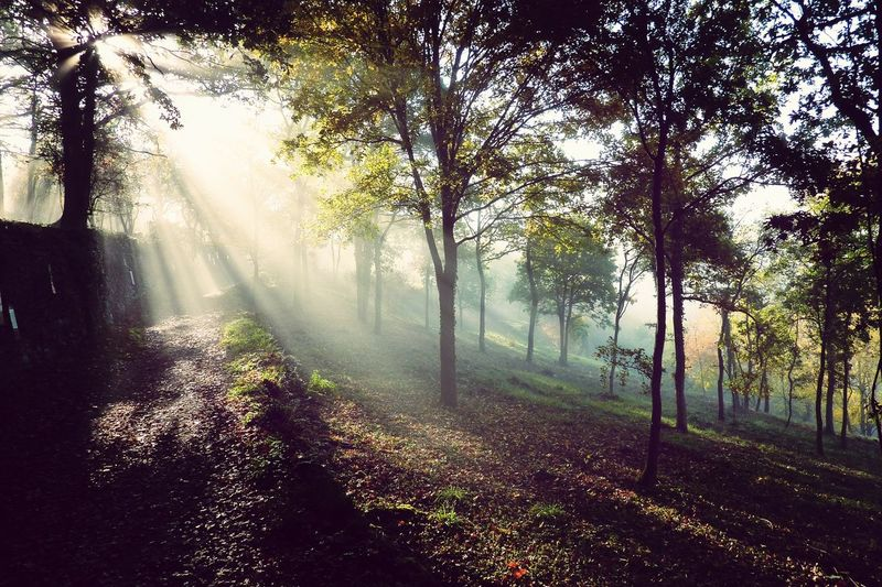 Sunlight streaming on forest