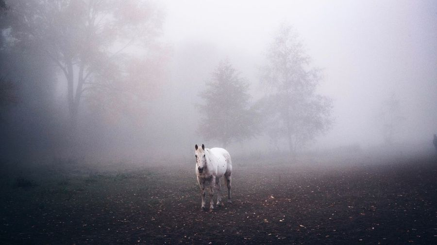 The Week on EyeEm Horse Fog Mammal Domestic Pets No People Day One Animal Animal Themes Animal Standing Nature Outdoors Cold Temperature Horse Fog Mammal Domestic Pets No People Day One Animal Animal Themes Animal Standing Nature Outdoors Cold Temperature