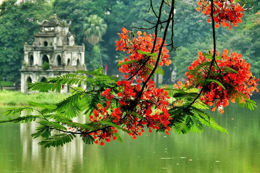 Vietnam Hanoi Travel Photography Blossoms  Adapted To The City The Secret Spaces Art Is Everywhere