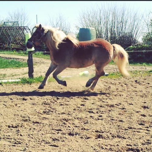 My Horse Ein Bisschen Spaß Muss Sein Nicr Weather Sunshine great day with my lovely horse ♥