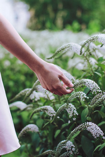 Cropped hand of woman touching plant