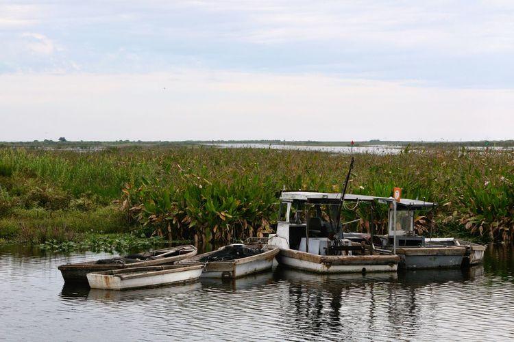 Fishing Boats on Lake Okeechobee Lake Okeechobee Clewiston Florida Boat Fishing Boats Q Quag Quagmire Marshland  Landscapes With WhiteWall
