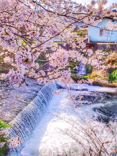 Sakura collection HDR Collection EyeEm Nature Lover Nature