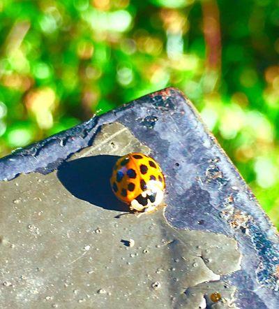 Puget Sound, Washington Shot On IPhone 6s Shot With Iphone 6s Washington State Seattle Nature Hanging Out Wildlife & Nature Ladybug
