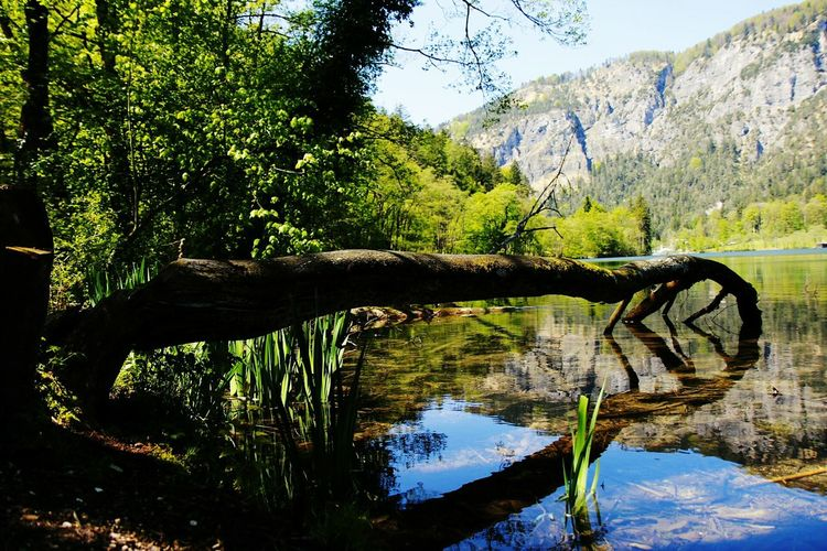 ThumseeLake View Mountain Range Lake Landscape Tranquil Scene Tree Tranquility Water Reflections Blue Sky Suny Day