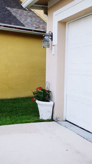 Potted plant outside house