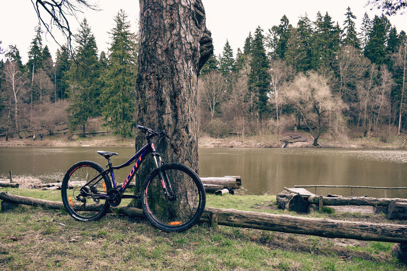 Bicycle by lake in forest