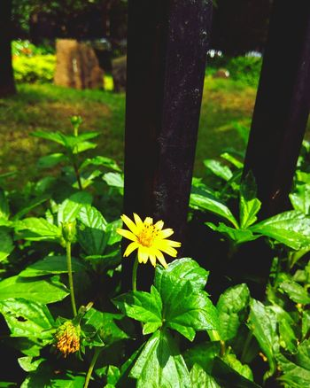 Peopleandplaces Color Of Technology MumbaiDiaries Culture Of Holiday Flower Freshness Growth Fragility Tree Trunk Petal Beauty In Nature Plant Nature Flower Head In Bloom Springtime Yellow Green Color Blossom Focus On Foreground Day Growing Outdoors Botany
