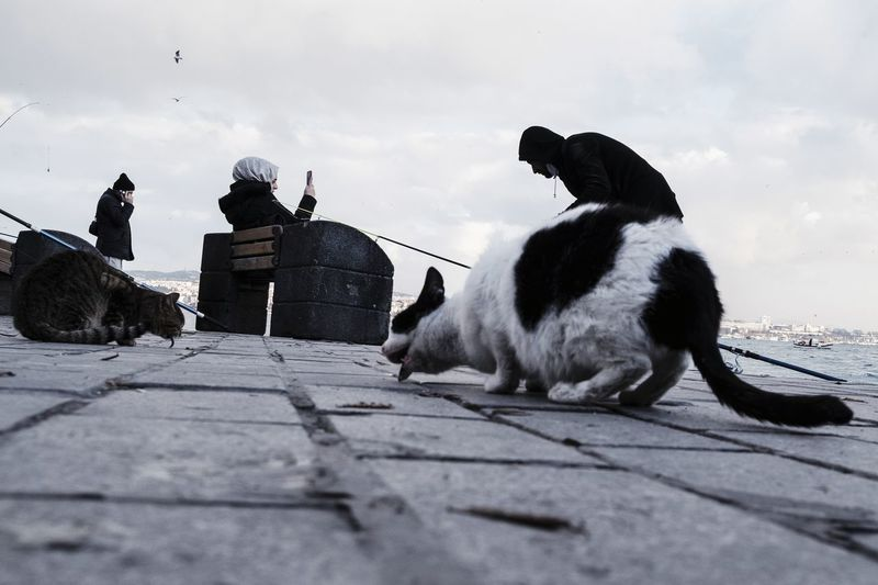View of two cats on the ground