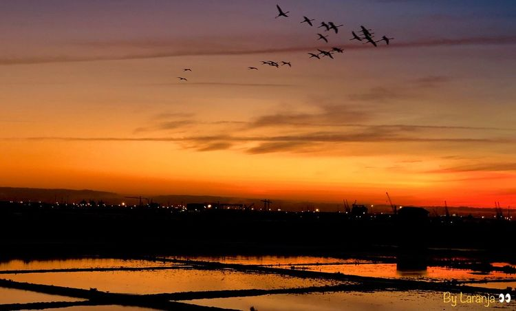 Boa noite Aveiro🌛 Sky Sunset Flying Bird