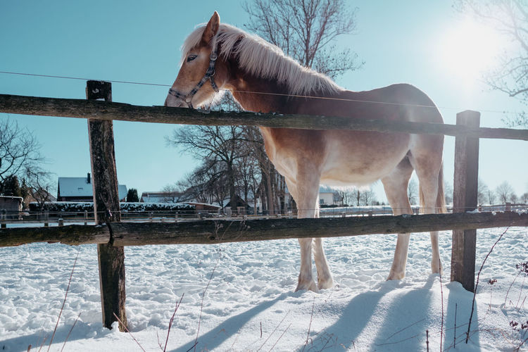 View of horse on snow covered field against sky