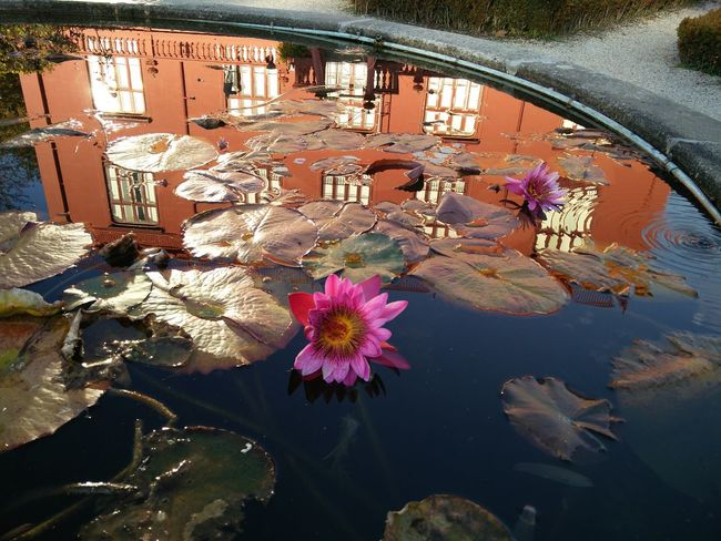 Flower Water Reflection Window Day No People Nature Outdoors Architecture Fragility Beauty In Nature Close-up City Flower Head Freshness